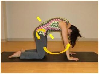 Pilates Cat Stretch Direction
