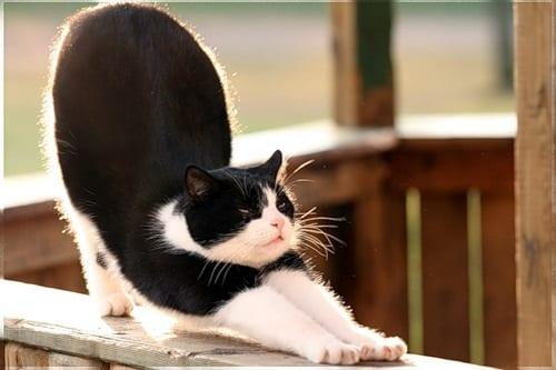 7 Keys To Your Best Cat Stretch