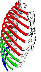 Costillas Pilates Spine Refresher