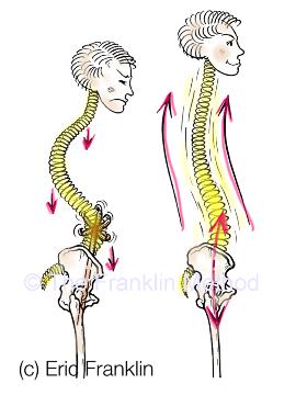 spine franklin method